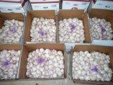 I UAE introducono l'aglio sul mercato bianco fresco del raccolto caldo di vendite 2016