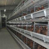 Автоматическая цыплятина наслаивает клетку (PT-H411)