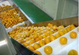 新鮮な果物ジュースの生産ライン