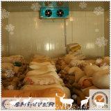 Pièce froide de poissons et de viande avec des panneaux de polyuréthane