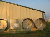 조립식 강철 구조물 닭 농장은 전 세트 장비로 흘렸다