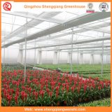 Chambre verte de pellicule de fleur/fruit/de polyéthylène culture de légumes avec le système de parasol