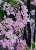 Árvore de imitação da flor de cereja para a decoração