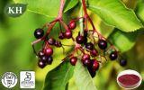 Antioxidansholunderbeerauszug der anthocyanidin-25% mit ISO-Bescheinigung