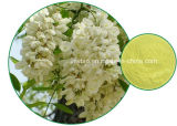 Oferta direta de fábrica Extração de Sophora Japonica Rutina e Quercetina