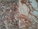 2017 nuove mattonelle esterne della parete di pietra del Faux del getto di inchiostro 200X300 di Digitahi