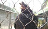 SUS304 304L SUS316 Vogel-Filetarbeits-Ineinander greifen