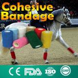 Fasciatura veterinaria dell'involucro del controllare del piedino del cavallo