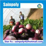 Парник высокого качества тавра Sainpoly солнечный для баклажана