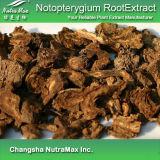 Extrait naturel de racine de 100% Notopterygium (10 : 1)