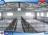 Las aves de corral grandes contienen con el tubo galvanizado (SSW-H-009)