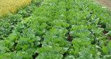 Fe&Mn肥料の/100 %の混合NPK肥料水溶性のTe (微量の元素)
