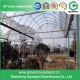 2017 het Water die van het Glas van de multi-Spanwijdte Groen Huis op Verkoop bewaren