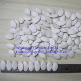 Semillas de calabaza comestibles blancas de nieve