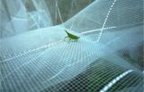 [هدب] يزرع خضرة مضادّة حشرة شبكة [50إكس25مش]