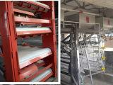 Cage automatique galvanisée de couche de bâti de H diplôméee avec ISO9001