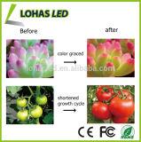 O diodo emissor de luz cheio do espetro PAR20 7W SMD3020 cresce E27LED claro cresce a ampola da PARIDADE para estufa Flowering do jardim interno da iluminação