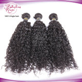 Do cabelo malaio por atacado do Virgin da fábrica tecelagem Curly do cabelo humano