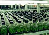 37W LED crecen el módulo ligero para la cultivación de la planta