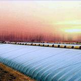 Heißes Verkaufs-niedrige Kosten-Gemüsetageslicht-Gewächshaus für die Landwirtschaft