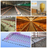 Automatic Equipment in Poultry House with Low Price