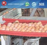 Jaula de la capa del pollo del equipo de las aves de corral