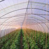Самый дешевый одиночный парник полиэтиленовой пленки тоннеля для земледелия Хелен