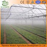 Multi serra della pianta del fiore del film di materia plastica della portata fatta in Cina