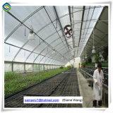 Парник полиэтиленовой пленки Multi-Пяди поставщика Китая аграрный для сбывания