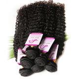 Pelo rizado rizado de la Virgen del Afro brasileño 3 manojos armadura humana mojada y ondulada del pelo rizado del pelo brasileño de la Virgen de 7A de Ombre del pelo rizado