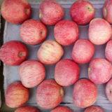 고품질 빨간색 Qinguan Apple