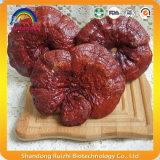 Fruiting тело Basswood Ganoderma Lucidum Reishi