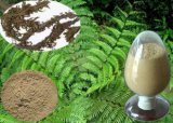 Huperzia 자연적인 Serrata 추출 (아) 1%, 1.5% Huperzine Huperzine HPLC