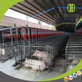 A gestação da porca para a caixa da gaiola para a venda
