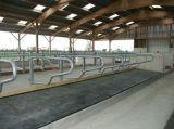Stuoia di gomma del cavallo della mucca, fornitore poco costoso stabile della stuoia del cavallo antiscorrimento