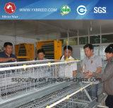 Sistema automático da gaiola da galinha da camada da estrela de prata