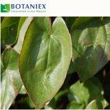 Выдержка травы Epimedium Icariin высокого качества для здоровья людей