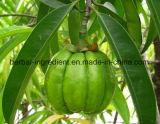 Cambogia van Garcinia Uittreksel, het Uittreksel van het Fruit van de Rotan, Hydroxy Citroenzuur 50%