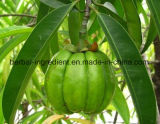 Garcinia Cambogia 추출, 등나무 과일 추출, Hydroxy 구연산 50%