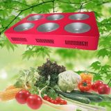 Indoor idroponico Plant Flower Supplementary Lighting 430W LED Panel Grow Light