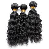 Onda Curly do cabelo humano do original 100 das vendas da fábrica