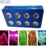 Hydroponics Growing Systemのためのカスタマイズされた1008W COB LED Grow Light