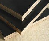 Revestimento de madeira revestida de vidoeiro marrom para construção