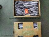 Blaufisch für Frozen Seafood Importers