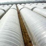 판매를 위한 2016년 다중 경간 필름 온실 상업적인 농업 온실