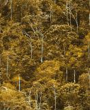 Papel de parede de bambu da floresta natural do estilo de China para a decoração Home