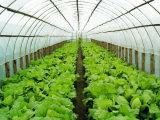 Зеленый овощ засаживает сети насекомого шпалеры