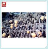 Rassemblement chaud de rangées de la vente 6 dans une moissonneuse de pomme de terre de rangée pour l'usage agricole