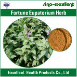 Extrait de fines herbes de Perrin d'Eupatorium de Fortutle d'extrait
