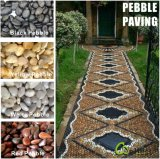 Il nero/Yellow/Red/White/Grey High Polished Pebble Graval Stone Paver e Paving